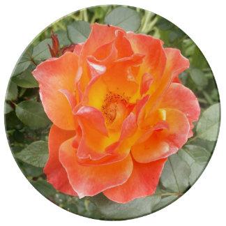 Color de rosa plato de porcelana