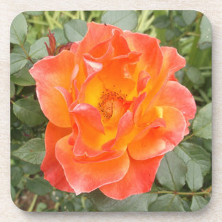 Color de rosa posavasos