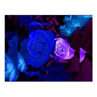 Color de rosa púrpura azul postal