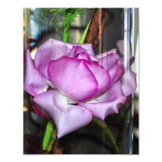 Color de rosa púrpura en un vidrio alto cojinete