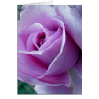 Color de rosa real tarjeta