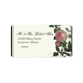 Color de rosa rosado botánico, negro - etiquetas