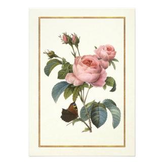 Color de rosa rosado con la mariposa anuncios