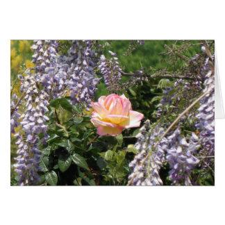 Color de rosa rosado con la tarjeta púrpura del