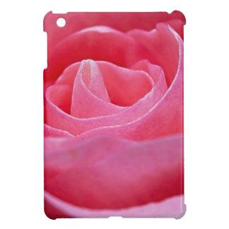 Color de rosa rosado que despliega