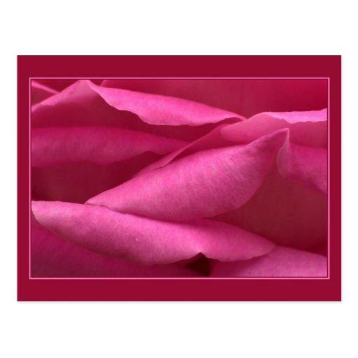 Color de rosa rosado tarjeta postal