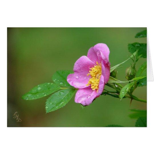 Color de rosa salvaje de la belleza de la tormenta tarjeta de felicitación
