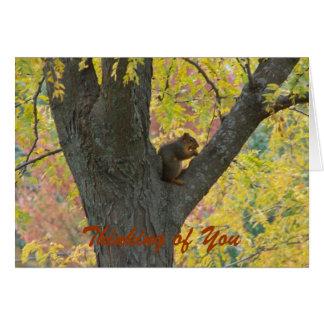 Colores de Squirrel&Autumn, pensando en usted Tarjeta