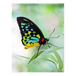 Colores del arco iris de la mariposa postal