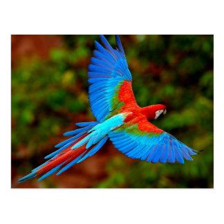 Colorful Scarlet Macaw en flight Postal