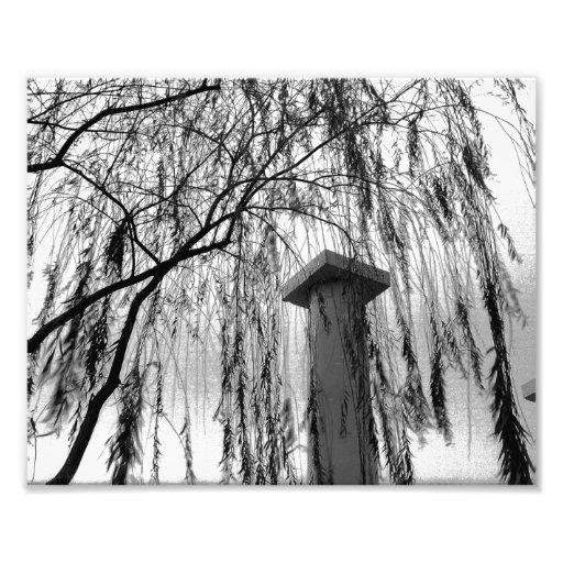 Columna bajo imagen blanco y negro del árbol que l impresiones fotográficas
