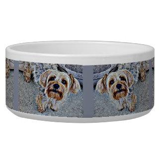 Comedero Yorkie Yorkshire Terrier coloreado
