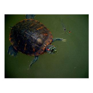 Compinches del almuerzo de la tortuga y del postal