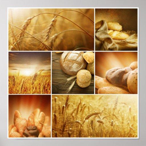 Conceptos de Wheat.Harvest. Collage del cereal Posters