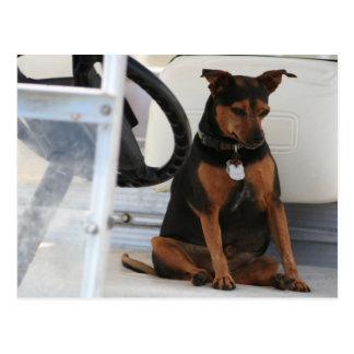 Conducción de la postal del perro