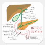Conducto biliar biliar de la carta del diagrama de colcomanias cuadradas personalizadas