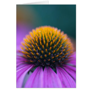 Coneflower púrpura (purpurea del Echinacea) Tarjeta
