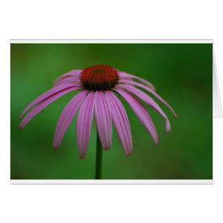 Coneflower púrpura tarjeta