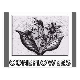 Coneflowers Postales