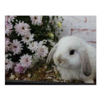 conejillo blanco, conejo con flores conejito de postal