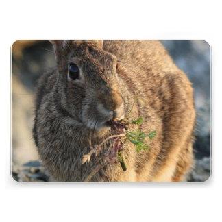 Conejo Anuncios Personalizados