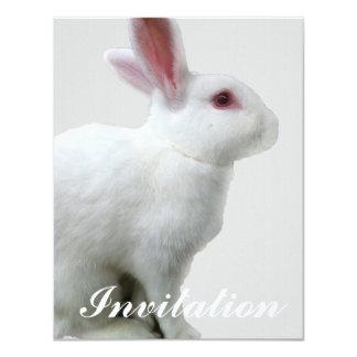 Conejo blanco comunicado personalizado