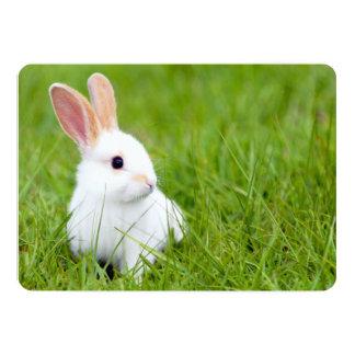 Conejo blanco comunicado personal