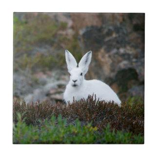 Conejo blanco lindo azulejo