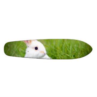 Conejo blanco patín