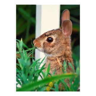 Conejo de conejito