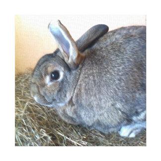 Conejo del otoño impresión en lienzo