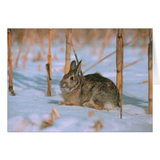Conejo en la nieve tarjeta de felicitación
