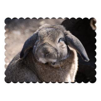 Conejo espigado del Lop Comunicados Personalizados