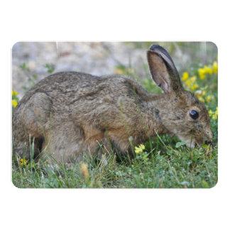 Conejo Comunicados Personalizados