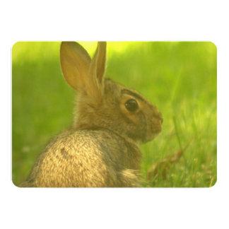 Conejo Comunicado