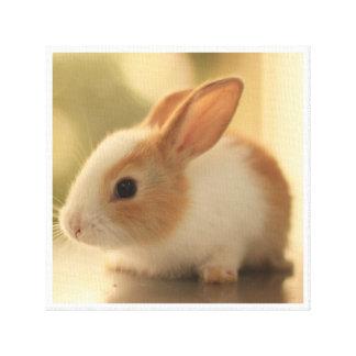 "Conejo lindo 12"" lona lienzo"
