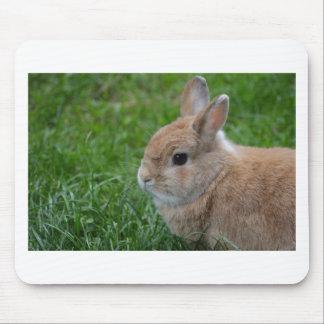 Conejo lindo alfombrilla de ratón