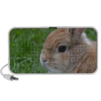 Conejo lindo altavoces