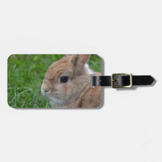 Conejo lindo etiquetas maletas
