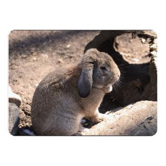 Conejo lindo anuncio