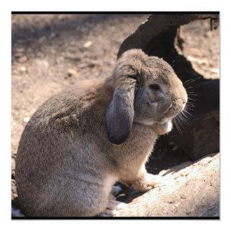 Conejo lindo anuncios