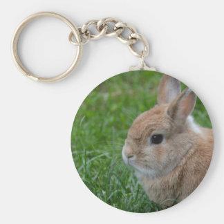 Conejo lindo llavero redondo tipo chapa