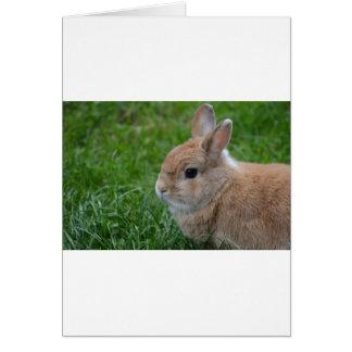 Conejo lindo tarjeta de felicitación