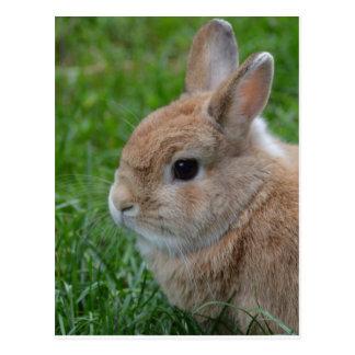 Conejo lindo postal