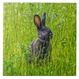 Conejo negro en la teja de cerámica de la foto de