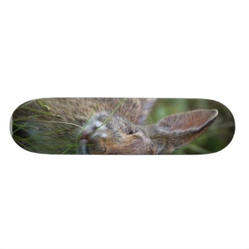 Conejo Patines