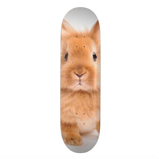 Conejo Monopatines