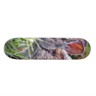Conejos de conejitos del conejito tabla de patinar