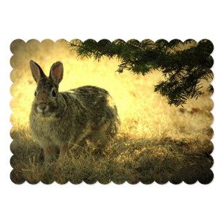 Conejos salvajes anuncio personalizado
