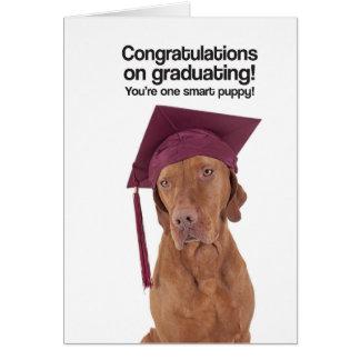 Congrats en la graduación (Vizsla) - tarjeta de
